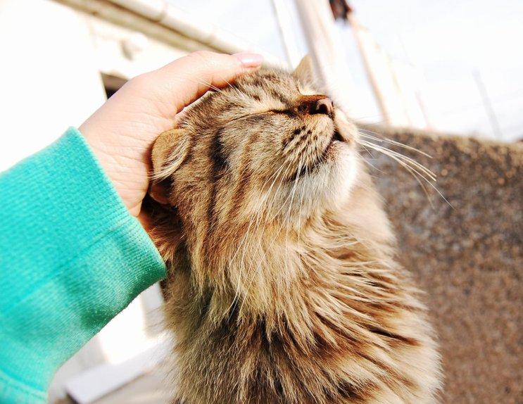 Pets Step - plavi ured - Nina Štos