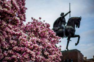 magnolije-tomislavac - lice grada
