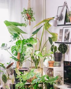 dnevna doza biljaka interijer 1