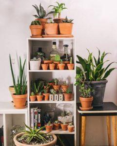 dnevna doza biljaka interijer 2