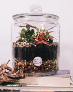 dnevna doza biljaka terarij