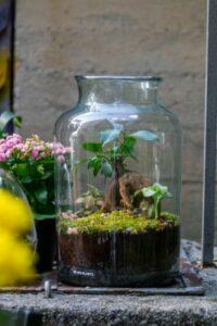 BILJKE.PLANTS životni prostor pretvaraju u dom!